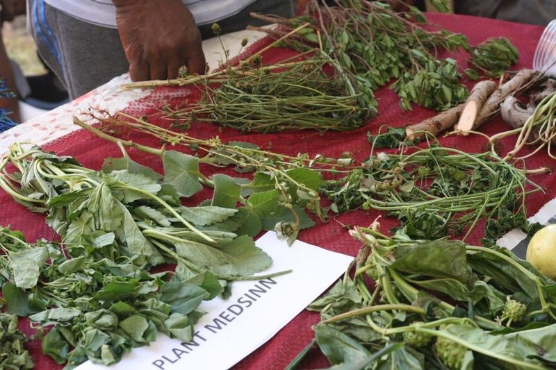 Medicinal plants demonstration