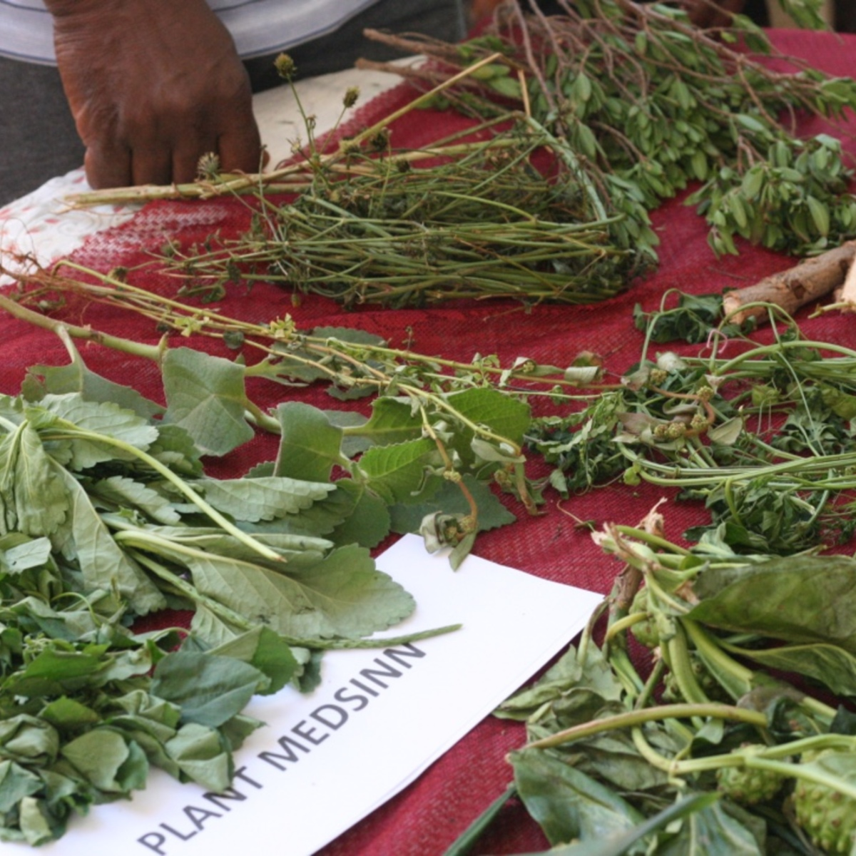 Medicinal plants demonstration